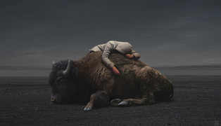Yuri-shwedoff-buffalo-recovered-internet